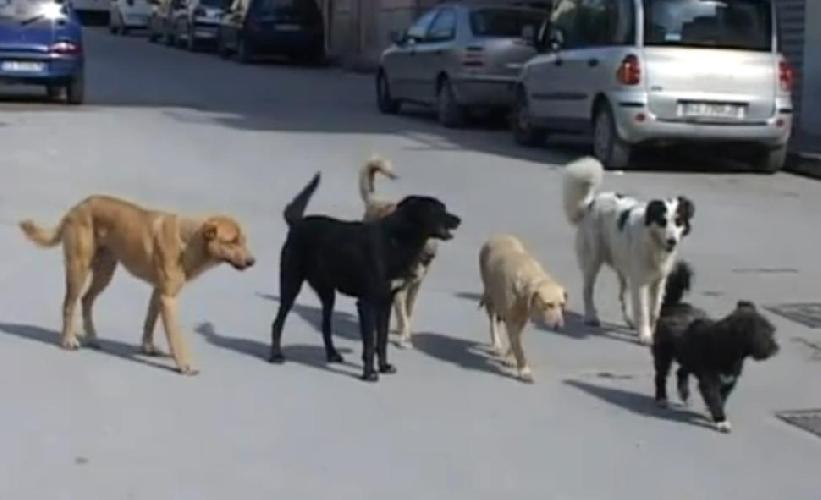 http://www.ragusanews.com//immagini_articoli/09-06-2017/cani-inseguono-ciclisti-auto-cosa-fare-500.jpg