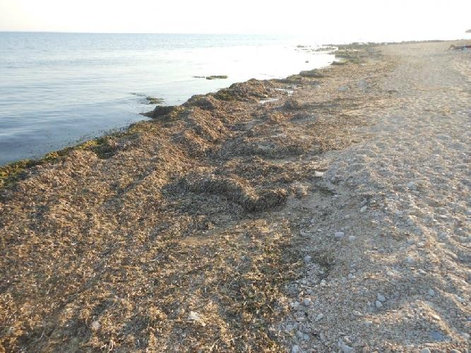 http://www.ragusanews.com//immagini_articoli/09-07-2014/alghe-e-pietrisco-sulla-spiaggia-di-casuzze-500.jpg