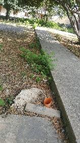 https://www.ragusanews.com//immagini_articoli/09-07-2021/1625828581-i-mancati-lavori-di-ripristino-al-parco-verde-di-via-risorgimento-a-modica-1-280.jpg