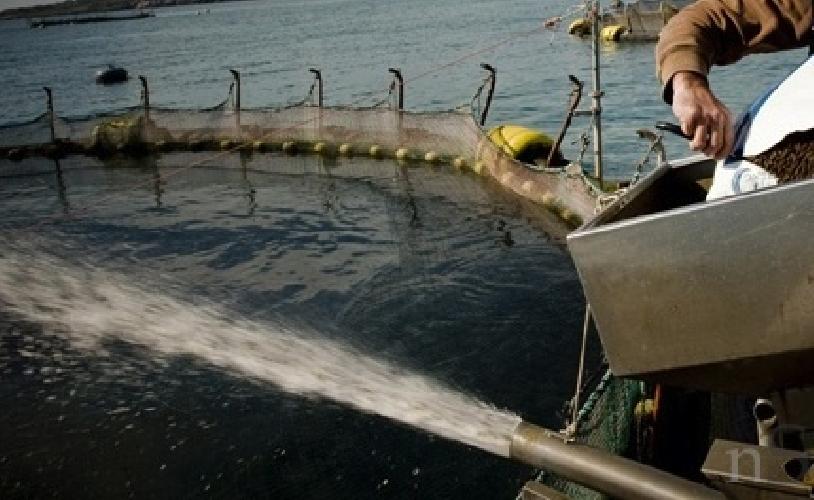 https://www.ragusanews.com//immagini_articoli/09-08-2015/la-plasmon-comprera-il-pesce-a-pachino-500.jpg