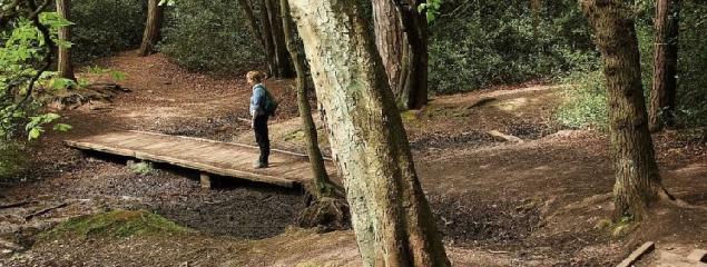 https://www.ragusanews.com//immagini_articoli/09-12-2018/ansia-depressione-bagno-foresta-240.png