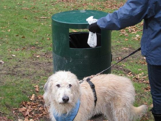 http://www.ragusanews.com//immagini_articoli/10-02-2017/deiezioni-canine-scattano-multe-420.jpg