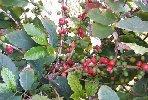 https://www.ragusanews.com//immagini_articoli/10-02-2019/pomodori-sicilia-inizia-coltivazione-caffe-100.jpg