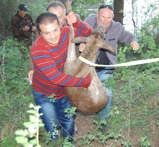 https://www.ragusanews.com//immagini_articoli/10-04-2014/salvato-daino-ferito-presso-la-diga-di-santa-rosalia-500.jpg