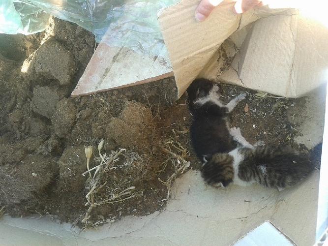 https://www.ragusanews.com//immagini_articoli/10-05-2014/la-strage-i-cuccioli-di-gatto-a-marina-di-ragusa-500.jpg