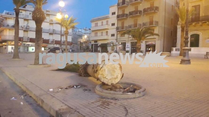 http://www.ragusanews.com//immagini_articoli/10-06-2017/unauto-abbatte-palma-piazza-rimembranza-500.jpg