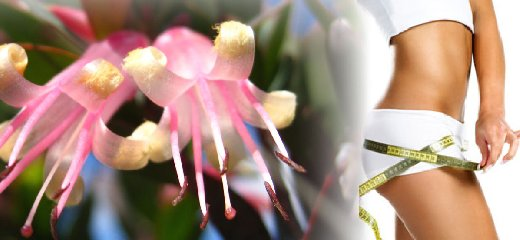 https://www.ragusanews.com//immagini_articoli/10-06-2018/dieta-combattere-fame-nervosa-fiori-australiani-240.jpg