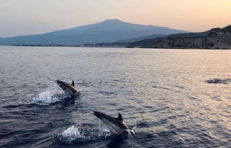 https://www.ragusanews.com//immagini_articoli/10-07-2018/scatto-suggestivo-delfini-isolabella-500.jpg