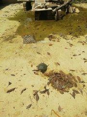 https://www.ragusanews.com//immagini_articoli/10-08-2019/1565453303-pozzallo-povere-papere-povere-tartarughe-1-240.jpg