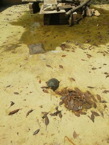 https://www.ragusanews.com//immagini_articoli/10-08-2019/1565453303-pozzallo-povere-papere-povere-tartarughe-1-500.jpg