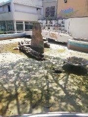 https://www.ragusanews.com//immagini_articoli/10-08-2019/1565453326-pozzallo-povere-papere-povere-tartarughe-1-240.jpg