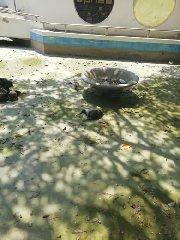https://www.ragusanews.com//immagini_articoli/10-08-2019/pozzallo-povere-papere-povere-tartarughe-240.jpg