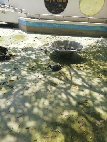 https://www.ragusanews.com//immagini_articoli/10-08-2019/pozzallo-povere-papere-povere-tartarughe-500.jpg