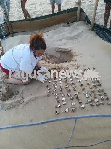 https://www.ragusanews.com//immagini_articoli/10-09-2019/sampieri-nate-62-tartarughine-video-foto-500.jpg