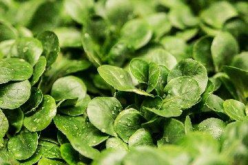 https://www.ragusanews.com//immagini_articoli/10-11-2019/dieta-insalata-per-dimagrire-ecco-funziona-240.jpg