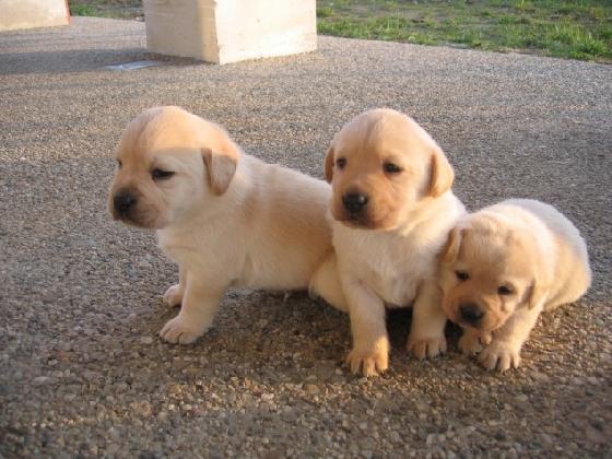 http://www.ragusanews.com//immagini_articoli/10-12-2016/adotta-un-cucciolo-420.jpg