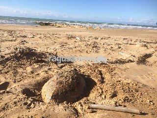 https://www.ragusanews.com//immagini_articoli/11-02-2018/moria-caretta-caretta-litorale-ibleo-240.jpg