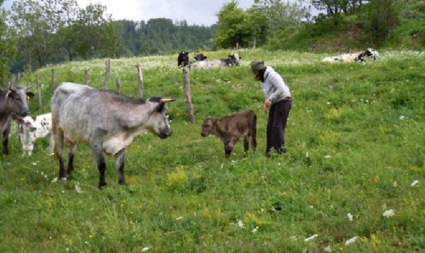 https://www.ragusanews.com//immagini_articoli/11-02-2019/modica-cani-sbranano-vitelli-500.jpg