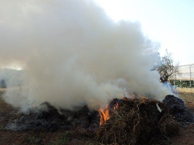 https://www.ragusanews.com//immagini_articoli/11-07-2018/fumarole-abusive-denunciati-titolari-aziende-agricole-500.jpg