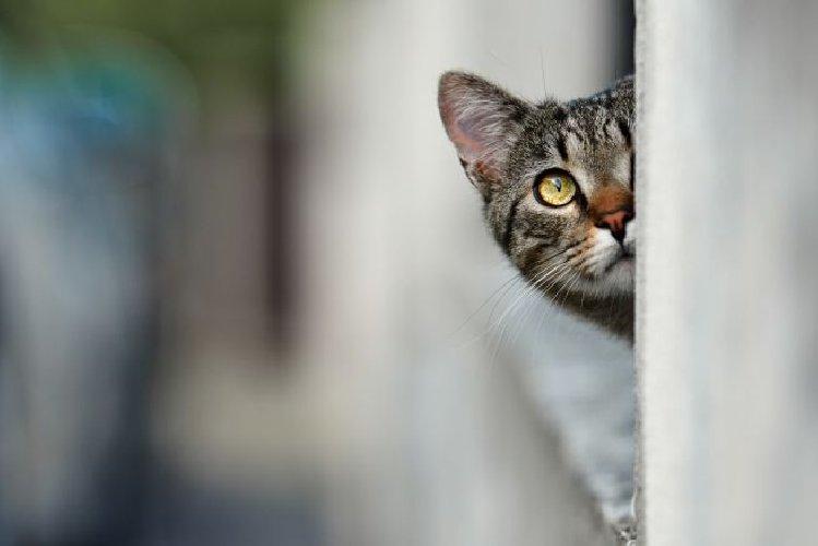 https://www.ragusanews.com//immagini_articoli/11-09-2018/catania-donna-mangiare-gatti-tenta-investirla-500.jpg