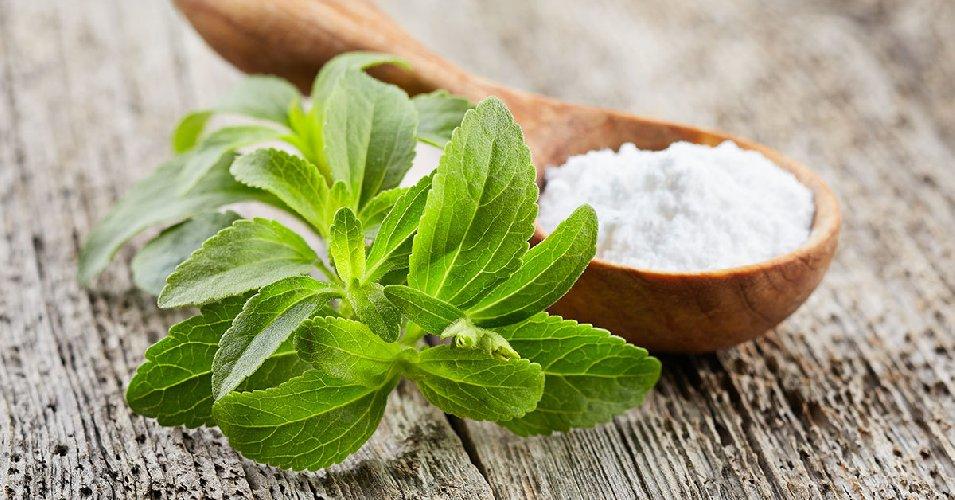 https://www.ragusanews.com//immagini_articoli/11-09-2019/stevia-e-diabete-cosa-devi-sapere-500.jpg