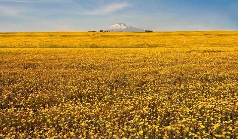 https://www.ragusanews.com//immagini_articoli/11-09-2021/sicilia-gialla-fino-a-ottobre-l-emergenza-covid-puo-finire-in-autunno-280.jpg