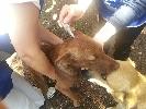 http://www.ragusanews.com//immagini_articoli/11-10-2016/chiaramonte-storie-di-cani-100.jpg