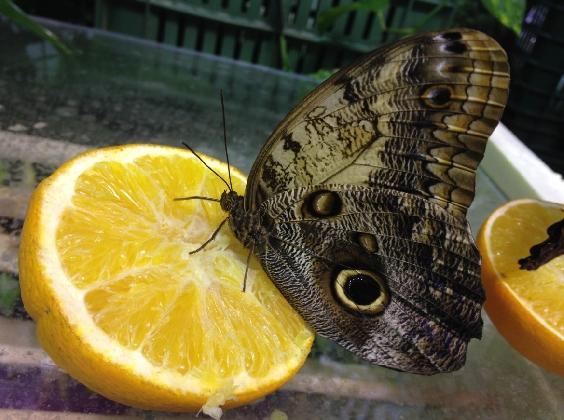 http://www.ragusanews.com//immagini_articoli/11-11-2016/la-casa-delle-farfalle-alla-fiera-emaia-420.jpg