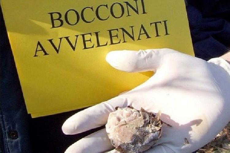 https://www.ragusanews.com//immagini_articoli/12-01-2016/bocconi-avvelenati-per-cani-e-gatti-di-frigintini-500.jpg