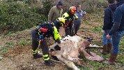 https://www.ragusanews.com//immagini_articoli/12-01-2019/pompieri-recuperano-bovino-caduto-scarpata-elicottero-100.jpg