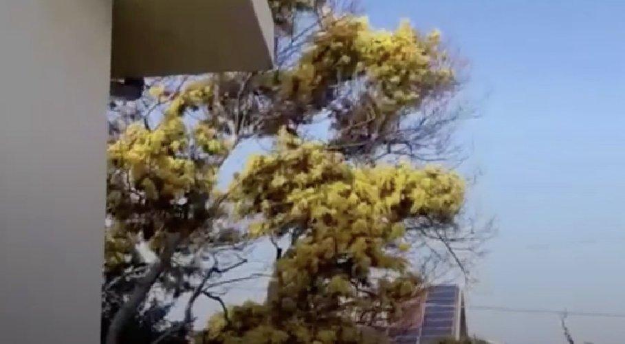 https://www.ragusanews.com//immagini_articoli/12-01-2021/maldo-anomalo-ecco-le-mimose-sbocciate-in-gennaio-in-sicilia-500.jpg