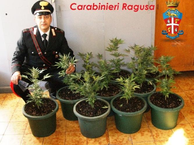 https://www.ragusanews.com//immagini_articoli/12-02-2014/giardiniere-modicano-coltivava-droga-nella-diga-di-santa-rosalia-500.jpg