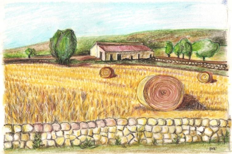 https://www.ragusanews.com//immagini_articoli/12-02-2014/il-grano-nella-terra-iblea-un-libro-500.jpg