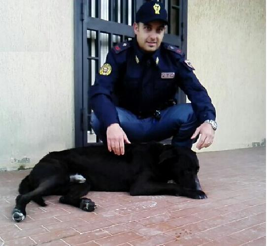 http://www.ragusanews.com//immagini_articoli/12-03-2016/la-polizia-salva-un-cane-investito-500.png