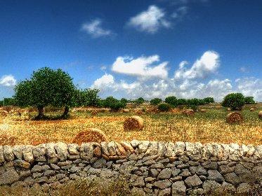 https://www.ragusanews.com//immagini_articoli/12-05-2021/sicilia-prima-per-colture-biologiche-ma-i-soldi-li-fanno-gli-altri-280.jpg