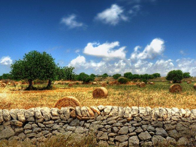 https://www.ragusanews.com//immagini_articoli/12-05-2021/sicilia-prima-per-colture-biologiche-ma-i-soldi-li-fanno-gli-altri-500.jpg