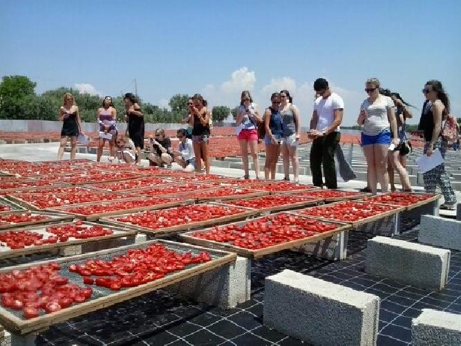 https://www.ragusanews.com//immagini_articoli/12-06-2015/gli-americani-vengono-a-studiare-i-pomodori-a-ispica-500.jpg