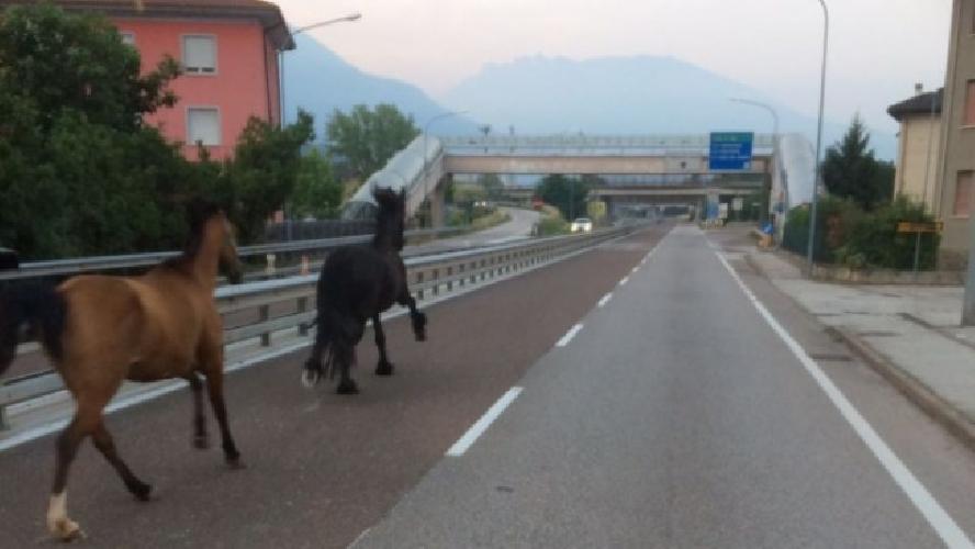 https://www.ragusanews.com//immagini_articoli/12-07-2017/cavalli-fuga-modicagiarratana-500.jpg