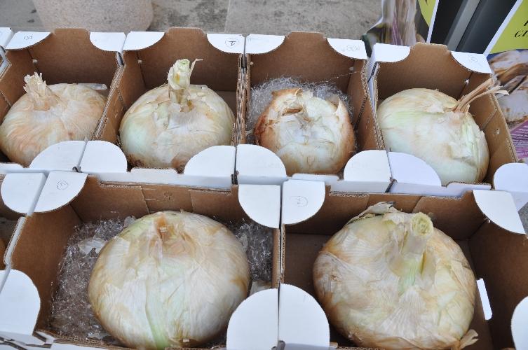http://www.ragusanews.com//immagini_articoli/12-08-2014/sagra-della-cipolla-a-giarratana-500.jpg