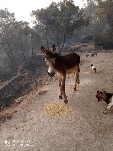 https://www.ragusanews.com//immagini_articoli/12-08-2021/il-grido-di-calaforno-ciccio-dobbiamo-salvarci-gli-animali-sono-morti-500.jpg