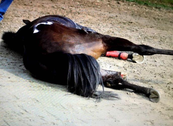 https://www.ragusanews.com//immagini_articoli/12-09-2018/caccamo-cavallo-muore-sole-denunciato-proprietario-maneggio-500.jpg