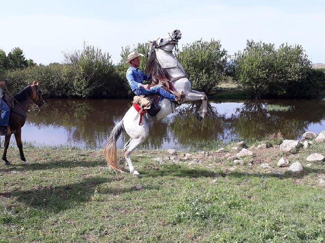 https://www.ragusanews.com//immagini_articoli/12-09-2018/giarratana-trekking-cavallo-500.jpg