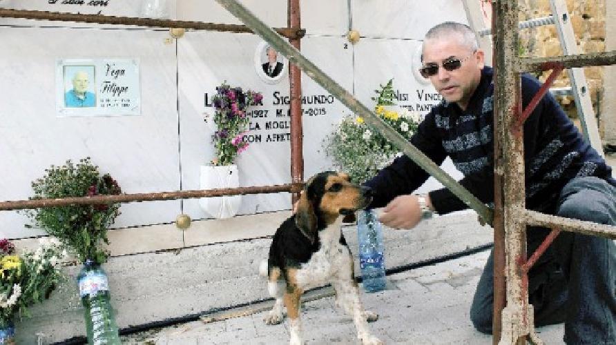 https://www.ragusanews.com//immagini_articoli/12-10-2015/c-e-un-cane-italo-che-ogni-giorno-fa-visita-alla-tomba-del-padrone-500.jpg