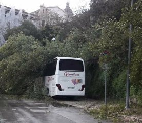 https://www.ragusanews.com//immagini_articoli/12-11-2019/ragusa-ibla-cade-albero-autobus-240.jpg
