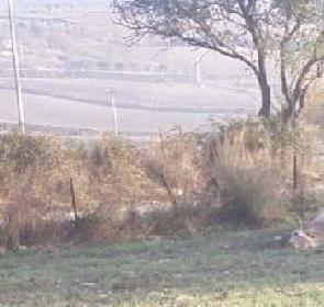 https://www.ragusanews.com//immagini_articoli/12-11-2020/ragusa-hanno-sparato-a-una-mucca-280.jpg