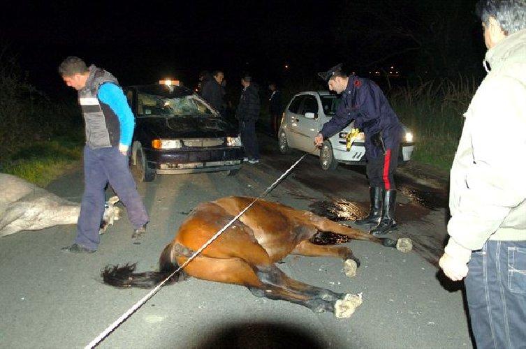 https://www.ragusanews.com//immagini_articoli/13-03-2018/cavallo-investito-ucciso-ragusa-modica-500.jpg