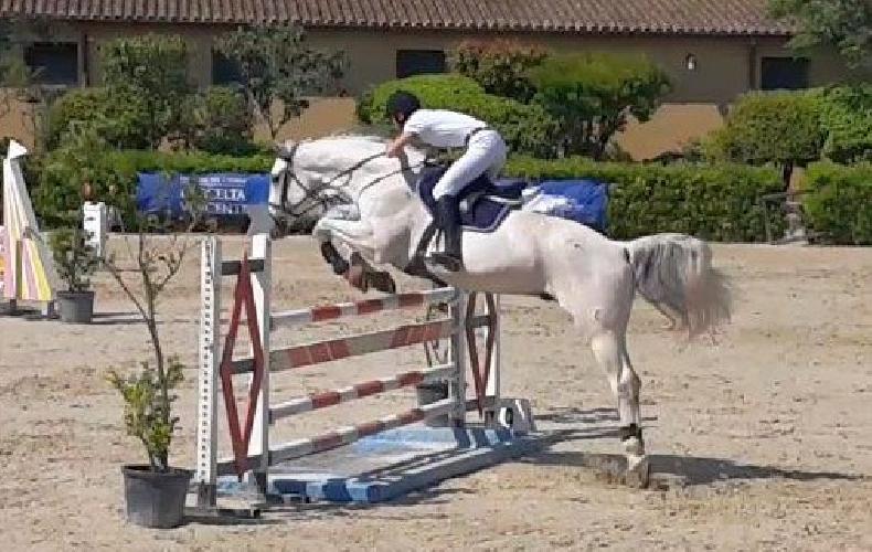 http://www.ragusanews.com//immagini_articoli/13-05-2016/concorso-nazionale-salto-a-ostacoli-500.jpg