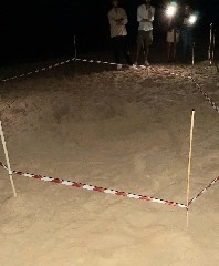 https://www.ragusanews.com//immagini_articoli/13-07-2020/tartaruga-caretta-caretta-depone-uova-a-playa-grande-240.jpg
