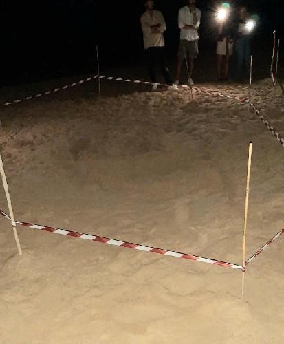 https://www.ragusanews.com//immagini_articoli/13-07-2020/tartaruga-caretta-caretta-depone-uova-a-playa-grande-500.jpg