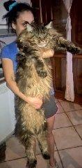 https://www.ragusanews.com//immagini_articoli/13-08-2018/1534156252-signori-sono-gatto-lungo-mondo-1-240.jpg